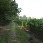 Feldweg zur Nagelburg