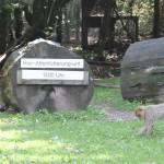Grosser Platz Affenberg