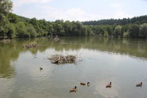 Nestbau im Mendlishauser Weiher