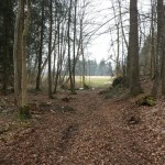 Wald bei Koenigseggsee