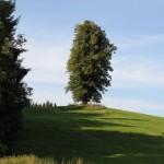 Anhoehe neben der Burg Kisslegg