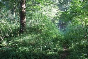 Burg Kisslegg im Wald