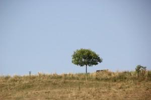 09 Baum Bank Lattener Steige