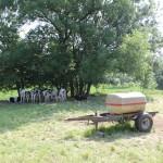 11 Kuehe im Schatten Lattener Steige