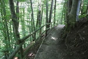 Befestigter Weg zum Burgstall 2 Zussdorf