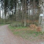 Wanderweg durch Dornacher Ried Wald