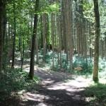 Wanderwege Gebelberg Burgbergle