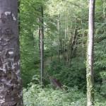 Anstieg zur Biegenburg