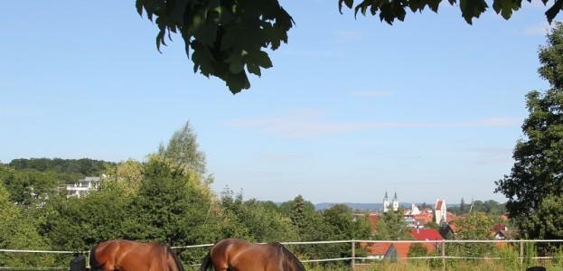Pferde Bad Waldsee