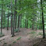 Bergsporn Ringburg Adelmuehle