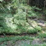 Feuerbachtobel Ringburg Adelmuehle