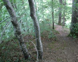 Fussweg zur Adelmuehle von Ringburg