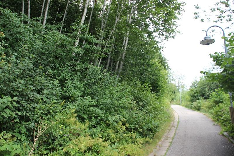 Weg zum Berg Heiligenwald Friesenhofen