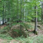 Weg zum Burgstall Ringburg Adelmuehle