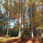 Wald der Bomser Hoehe