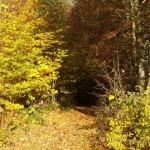 Waldweg Bomser Hoehe
