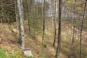 Abhang Heiligenberg Wald