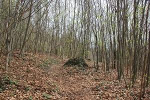 Auf und Ab Heiligenberg Wald