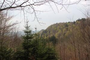 Heiligenberg Wald