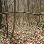 Mulde Heiligenberg Wald