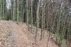 Steile Abhaenge Heiligenberg Wald