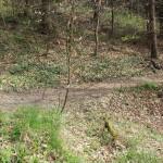 Wanderpfad Heiligenberg Wald