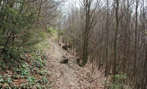 Wanderpfade Heiligenberg Wald