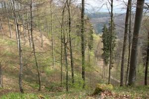 Wanderwege im Wald Heiligenberg