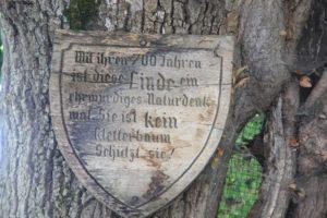 Denkmalshinweis Sommerlinde Reichenau