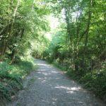 Weg zum Schloss Achberg