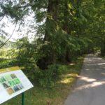 Metasequoia Allee Insel Mainau