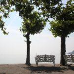 Ufer Insel Mainau