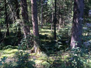 Wald Burgermoos bei Kisslegg