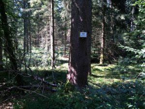 Wald im Burgermoos