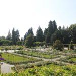 Italienischer Rosengarten Insel Mainau