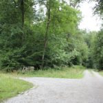 Waldwege zum Erwandern Mochenwangen