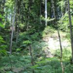 Bannwald-Bereich Schmalegger und Rinkenburger Tobel