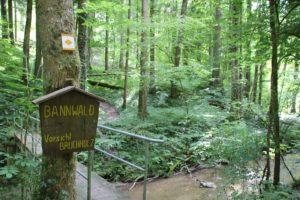 Bannwald Schild Tobel