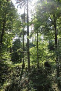 Bannwald im Schmalegger und Rinkenburger Tobel