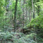 Bannwaldgebiet Schmalegger und Rinkenburger Tobel