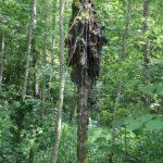 Baum Kunst Schmalegger und Rinkenburger Tobel