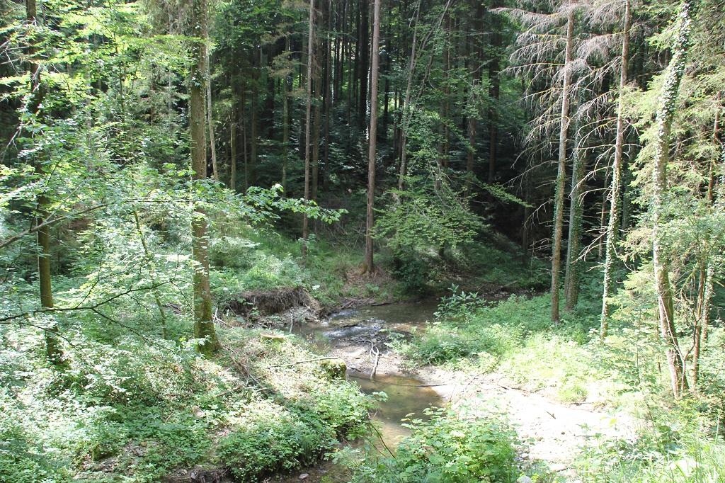 Buttenmuehlebach-Kurve Schmalegger und Rinkenburger Tobel