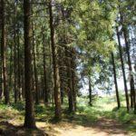 Kurzer Waldabschnitt Lausheimer Weiher