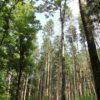 Laub und Nadelwald im Schmalegger und Rinkenburger Tobel