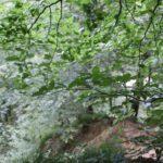 Steiler Abhang Schmalegger und Rinkenburger Tobel