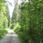 Waldweg Schmalegger und Rinkenburger Tobel