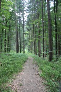Wanderpfad Schmalegger und Rinkenburger Tobel