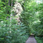 Wanderweg durch im Schmalegger und Rinkenburger Tobel
