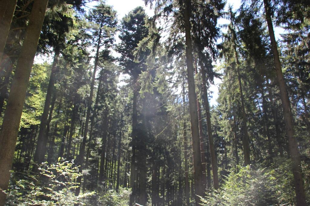 Bewaldeter Anstieg Burgberg Steinishaus