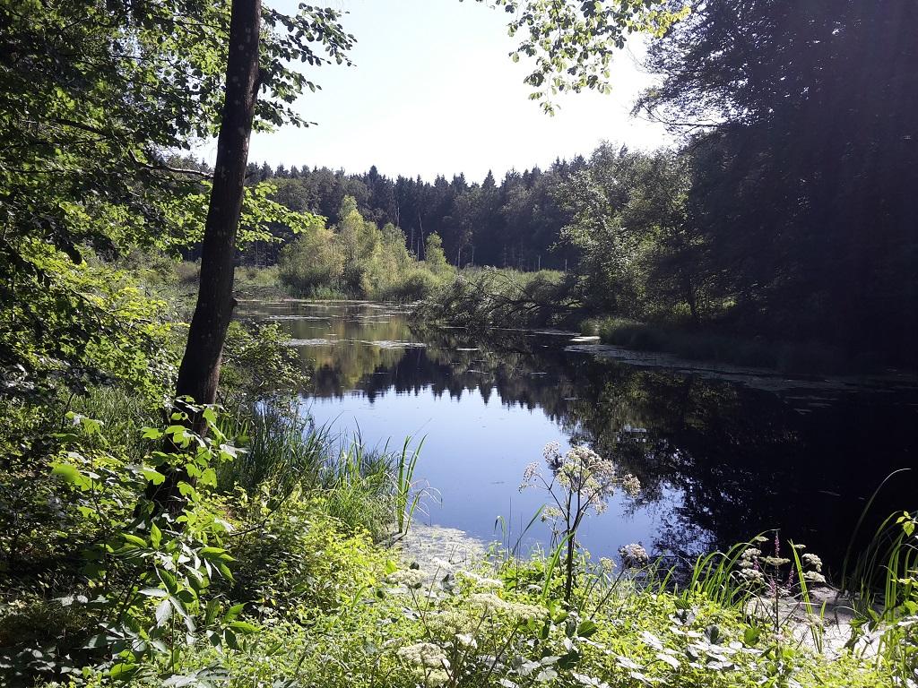 Hagenbacherweiher im Altdorfer Wald